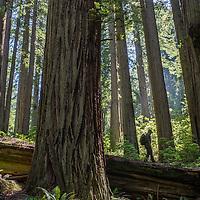 25 - Redwoods National Park