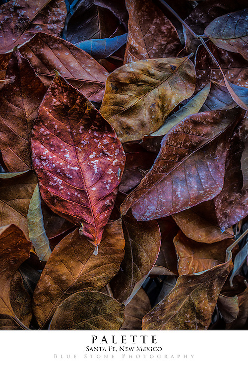 20x30 poster print of autumn leaves.