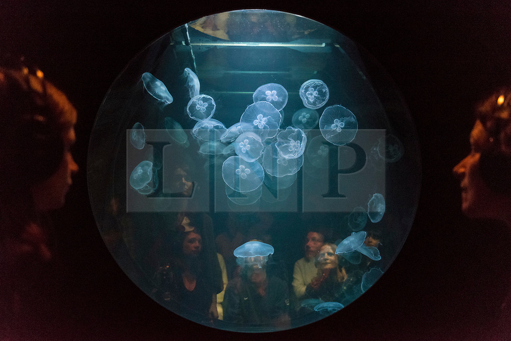 """© Licensed to London News Pictures. 20/11/2019. LONDON, UK. Visitors view """"win > < win"""", 2017, by the artist collective Rimini Protokoll, a tank of live jellyfish, one of the few species that actually benefit from the effects of global warming. Preview of """"Eco-Visionaries"""" exhibition at the Royal Academy of Arts in Piccadilly.  The exhibition examines humankind's ecological impact on the planet through works from 21 international practitioners using a variety of media.  The show runs 22 November to 23 February 2020.  Photo credit: Stephen Chung/LNP"""