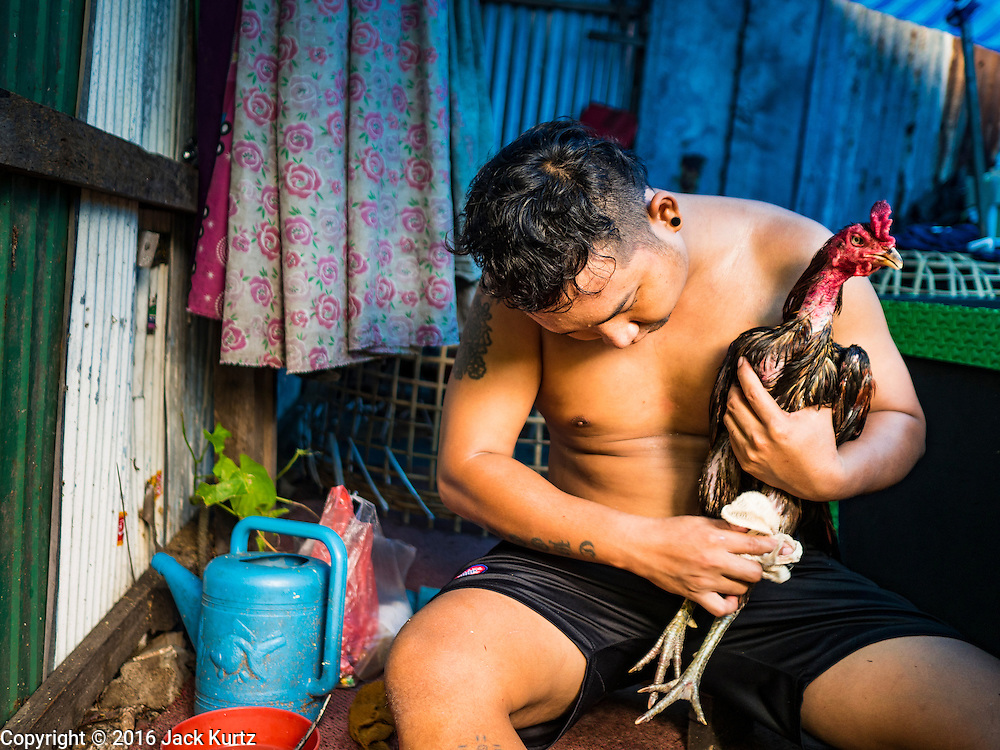 10 AUGUST 2016 - BANGKOK, THAILAND: A resident of the Pom Mahakan slum massages his fighting cock after a training session. Residents of the slum have been told they must leave the fort and that their community will be torn down. The community is known for fireworks, fighting cocks and bird cages. Mahakan Fort was built in 1783 during the reign of Siamese King Rama I. It was one of 14 fortresses designed to protect Bangkok from foreign invaders. Only of two are remaining, the others have been torn down. A community developed in the fort when people started building houses and moving into it during the reign of King Rama V (1868-1910). The land was expropriated by Bangkok city government in 1992, but the people living in the fort refused to move. In 2004 courts ruled against the residents and said the city could take the land. Eviction notices have been posted in the community but most residents have refused to move. Residents think Bangkok city officials will start evictions around August 15, but there has not been any official word from the city.      PHOTO BY JACK KURTZ