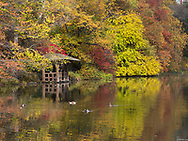 A rustic shelter at the Lake in Central Park