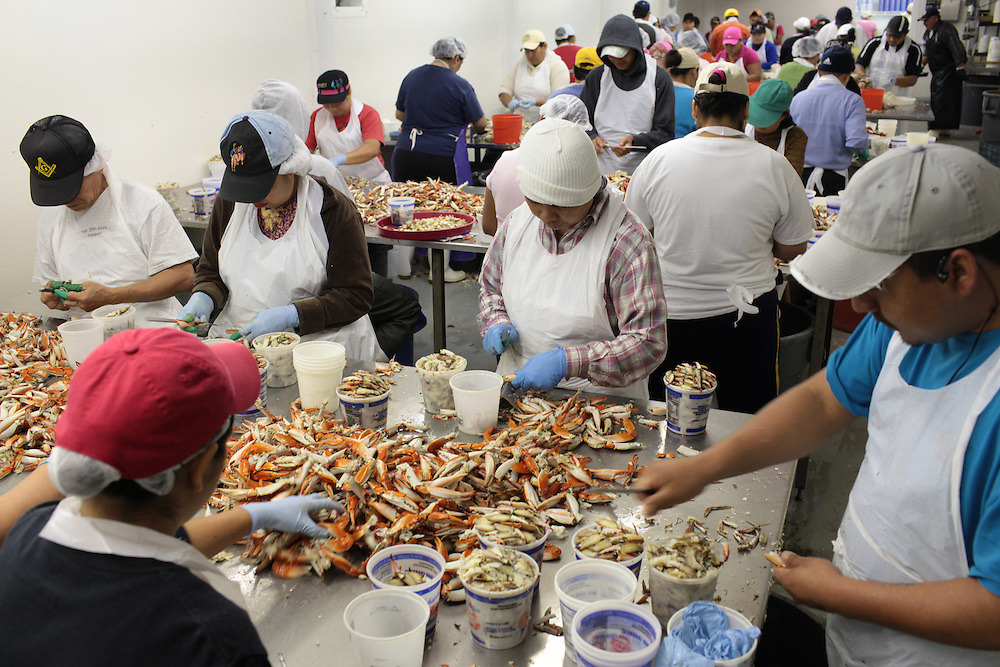 Workers picked blue crab Thursday at the Pontchartrain Blue Crab processing facility in Slidell, LA on July 15, 2010. Gary Bauer, president of the company said his sales of blue crab and shrimp have dropped to 20% of their normal $8 million-a-year pace since the BP Oil Spill.
