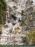 Folded granite exposed after a treeslide along Milford Sound/Piopiotahi, Fiordland National Park, New Zealand