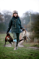 UK ENGLAND GRANTHAM 15DEC11 - A guest retrieves dead game birds during the pheasant shooting at the Belvoir Castle Estate in Leicestershire, England...The shooting of game birds for sport involves the killing of millions of birds every year - over 35 million pheasants and 6.5 million partridges are produced to be used a live targets in the UK each year.....jre/Photo by Jiri Rezac..© Jiri Rezac 2011