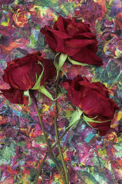 Three dried deep red roses lying with their stems on dish with complex pattern of roses of similar colour