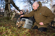 Dave Barclay (Cat Conservation Officer at RZSS) and Hebe Carus (Scottish Wildcat Action officer) release a Scottish Wildcat after taking blood and semen samples.