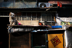 epa03141926 A dog sits on the roof of a make-shift hutch in a low-income residential area in Beijing, China 12 March 2012. China's inflationary pressures are expected to continue to ease this year as the world's second largest economy slows to an appropriate level, a top statistical official said on 11 March. The country's main measure of consumer price inflation fell to 3.2 per cent in February, down from a 4.5-per-cent rise recorded in January, its lowest level for 20 months.  EPA/HOW HWEE YOUNG