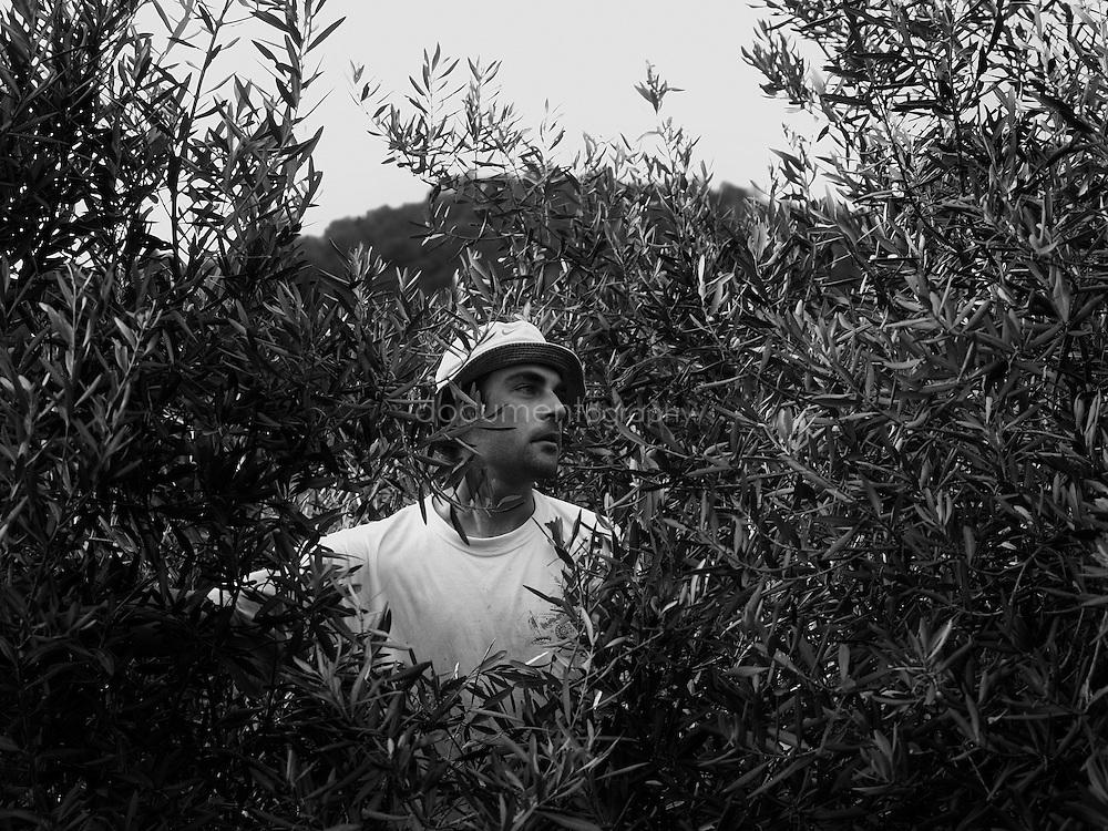 A worker in between trees, Domaine du Jasson, La Londe Les Maures, France., La Londe Les Maures, France.