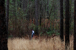January 19, 2019 - Southern Pines, North Carolina, US - Jan. 19, 2019 - Southern Pines N.C., USA - A runner makes his way through the native Long Leaf Pines during the 10th Annual Weymouth Woods 100km ultra marathon at the Weymouth Woods Nature Preserve. Runners needed to complete 14 laps of the 4.47 mile course for 62.58 miles in under the 20-hour time allotment. (Credit Image: © Timothy L. Hale/ZUMA Wire)