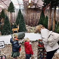 Nederland, Amsterdam , 8 december 2010..Kerstboom kopen en andere kerst snuisterijen bij tuincentrum Osdorp..Foto:Jean-Pierre Jans