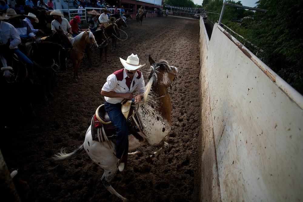 Julia Robinson photo.Coleadero, the most popular suerte, is sometimes singled out for an afternoon of practice or informal competition.  At Rodeo Los Corrales in Comfort, Texas, charros pay $20 for a run at three steers.