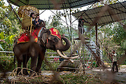 An elephant waits to be ridden by tourists at the Olive Dam Dai cultural in  Xishuangbanna, China. The Dai are an ethnic minority living in western China as well as northern Laos, Thailand, and Vietnam.