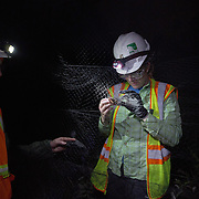 STERLING, VA - JUN13: Bethany Gregory, a field technician with GAI Consultants, removes a red bat, from a mist net July 13, 2015, while Cynthia Hauser, an endangered Species Biologist (left) looks on, during a bat census to make sure the planned Silver Line train yard near Dulles Airport doesn't impact the bats living in the woods near the site. Fine 'mist nets' are hung from polls to capture bats and determine whether there is a threatened bat species in the area. The bats are then released. Photo by Evelyn Hockstein/For The Washington Post)