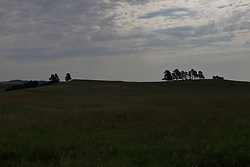 A small group of trees grow in a line on the ridge of a rise on the prairie in South Dakota
