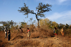 Chitrakoot District, Uttar Pradesh, India: Women and children work in the fields gathering wood in the Chitrakoot District of Uttar Pradesh. In India woman are responsible for carrying out many hard labored tasks. (Photo by Ami Vitale)