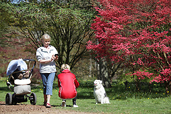 © Licensed to London News Pictures. 22/04/2015. Bristol, Avon, UK. Two women taking a photograph of their dog sitting in front of a Japenese Maple tree at Westonbirt, The National Arboretum today, 22nd April 2015. The south west of England is set for more warm temperatures and plenty of sunshine today. Photo credit : Rob Arnold/LNP