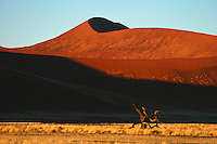 The morning early sun beams glow over the dunes of Namib Desert and unveil the amazing colours of this fantastic place.