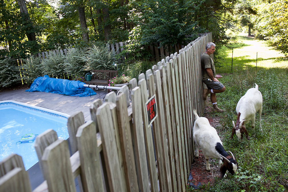 Farmer Jeff Mullins watches over his herd of goats as they graze over a lot-side easement behind the home of Steve Holdaway in Chapel Hill, N.C., Thurs., July 22, 2010...D.L. Anderson for The Wall Street Journal..GOATS