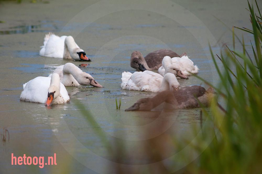 The Netherlands, Nederland Boezem van Bergambacht tussen Vlist en Stolwijk