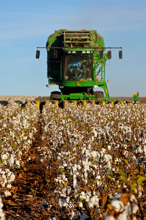 2010 Cotton Harvest north of Carnegie, Oklahoma  in Caddo County.