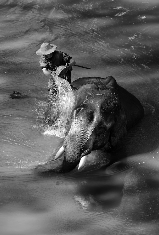 Mahout and elephant in Chiangmai, Thailand.