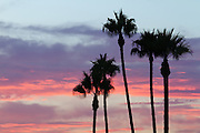 Palm Tree Silhouette at Sunset in Orange County, California