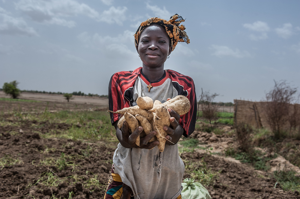 Margou, Burkina Faso - 5 May 2014: A woman shows potatoes in the village of Margou, Burkina Faso with Action Contre la Faim (Achievements Resilience Programme).