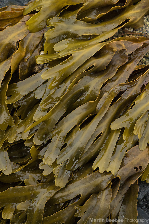 Seaweed on the shore of Seward, Alaska