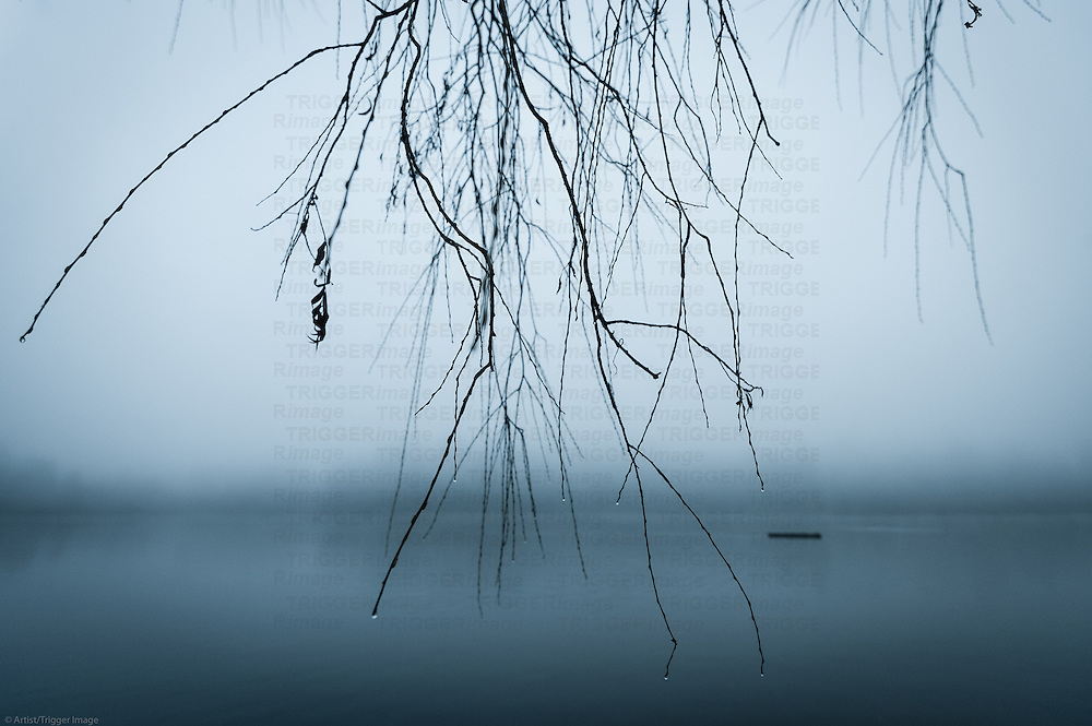 Fog over Lost Lagoon with a branches from a weeping willow holding water droplets.