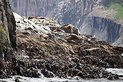Fur Seals at The Friars