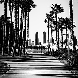 San Diego skyline from Coronado Island black and white picture. San Diego buildings are viable through palm trees on Coronado Island's Bayshore Bikeway (Silver Strand Bikeway) in Southern California. Photo was taken in 2012 and is high resolution.