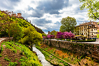 The Darro River with the Alhambra Palace aove on the left, Granada, Granada Province, Andalusia, Spain.