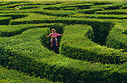 Seen from a high viewpoint, a young girl rides on her father's shoulders in the middle of the Longleat Hedge Maze. She can barely see over the walls of foliage, so tall is the labyrinth of twisty pathways, and she holds out her hands to brush against the green foliage. Made up of more than 16,000 English Yews, Longleat's spectacular hedge maze - the world's largest - was first laid out in 1975 by the designer Greg Bright. The Maze covers an area of around 1.48 acres (0.6 hectares) with a total pathway length of 1.69 miles (2.72 kilometres). Unlike most other conventional mazes it's actually three-dimensional.