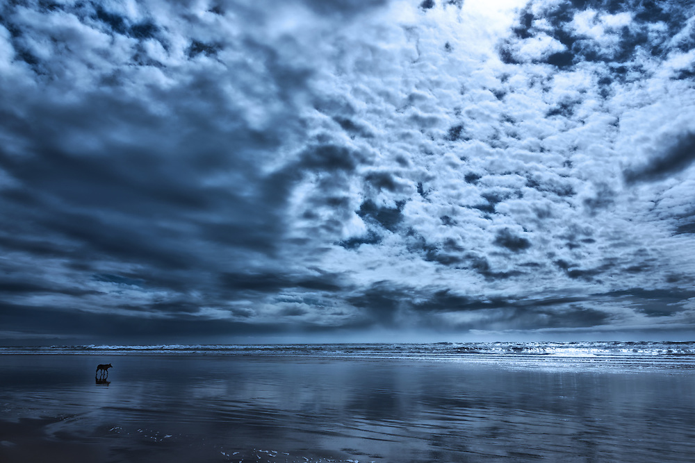 Dog walks on a beach under a dark cloudy sky, Agadir, Morocco.