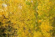 Autumn forest in countryside, river Vinalopo, Banyeres de Mariola, Ruta de los Molinos, Alicante province, Comunidad Valenciana, Spain