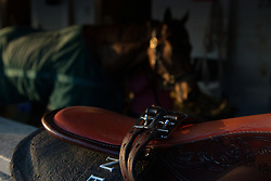 Horses cooled down in the shed row after workouts Tuesday, April 30, 2013 at Churchill Downs in Louisville. Photo by Jonathan Palmer