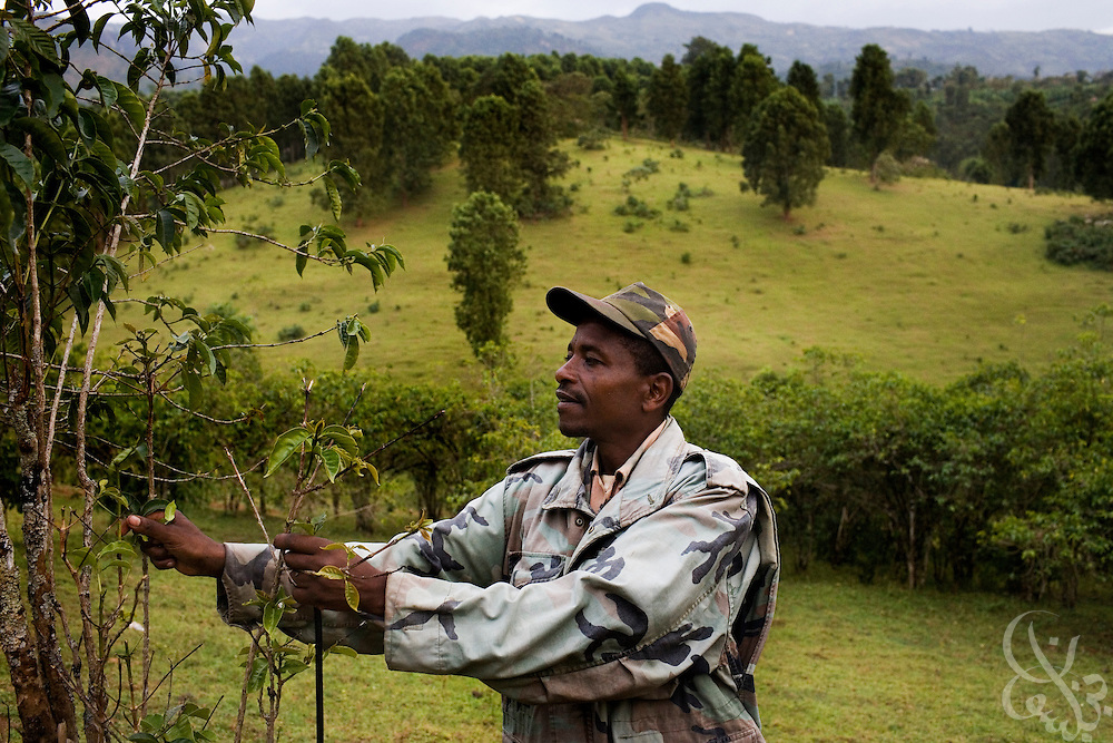 Coffee farmer Yumura Yune (age 36) checks on his coffee trees February 23, 2007 on his farm in the Sidamo coffee region of southern Ethiopia in the village of Bokaso. Yune struggles to make enough money through coffee farming to support his wife and eight children and says that coffee prices earned by Ethiopian farmers need to increase in order for him to get ahead.