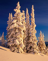 Snow covered trees at dawn in the Cariboo Mountains British Columbia
