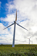 Windmills, Hawi, North Kohala, The Big Island of Hawaii
