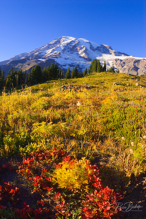 Mount Rainier from the Alta Vista Trail in Paradise Park, Mount Rainier National Park, Washington