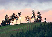 WillaKenzie Estate winery, Willamette Valley, Oregon