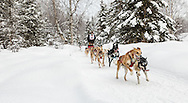Musher James Wheeler competing in the Fur Rendezvous World Sled Dog Championships at Goose Lake in Anchorage in Southcentral Alaska. Winter. Afternoon.