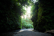 Fern Canyon, Redwood National Park, Humboldt, CA