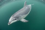 Dolphins & Porpoises