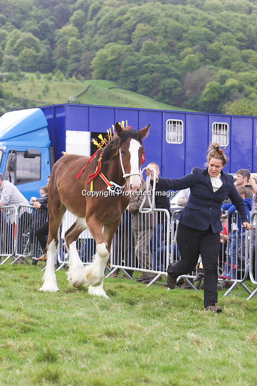 John Cross' Yearling Filly CROSSINGTONS OPHELIA <br />
