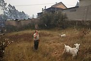LEIRIA, PORTUGAL - JUNE 19:  A man talks on the phone as he found two of his seven goats alive at his return home after a wildfire took dozens of lives on June 19, 2017 near Castanheira de Pera, in Leiria district, Portugal. On Saturday night, a forest fire became uncontrollable in the Leiria district, killing at least 62 people and leaving many injured. Some of the victims died inside their cars as they tried to flee the area.  (Photo by Pablo Blazquez Dominguez/Getty Images)