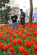 Turkey, Istanbul, A muslim couple stroll in a field of tulips