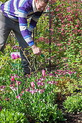 Feeding a border with Growmore fertiliser in spring