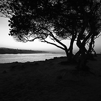 "Newport Beach Jetty Tree Black and White Photo. The Jetty is located at Peninsula Point at the end of Balboa Peninsula where Newport Bay meets the Pacific Ocean. The opening scene of Gilligan's Island was filmed here where the Minnow heads out to sea. Toward the right is the infamous Wedge and toward the left is Corona Del Mar. Newport Beach is a beach community along the Pacific Ocean in Orange County ""The OC"" Southern California. Image Copyright © Paul Velgos All Rights Reserved."