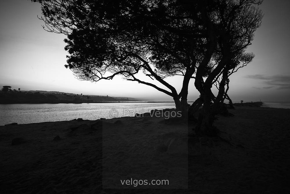 """Newport Beach Jetty Tree Black and White Photo. The Jetty is located at Peninsula Point at the end of Balboa Peninsula where Newport Bay meets the Pacific Ocean. The opening scene of Gilligan's Island was filmed here where the Minnow heads out to sea. Toward the right is the infamous Wedge and toward the left is Corona Del Mar. Newport Beach is a beach community along the Pacific Ocean in Orange County """"The OC"""" Southern California. Image Copyright © Paul Velgos All Rights Reserved."""